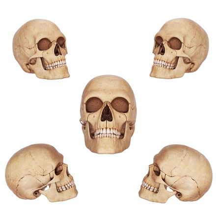 five skulls different view photo