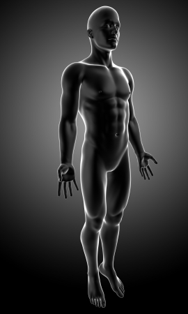body blood: anatomy of male body in gray