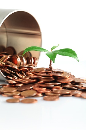 coins and little tree Stock Photo