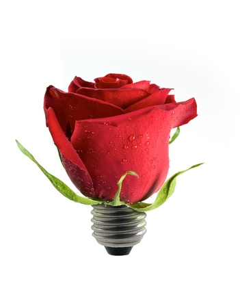 light bulb with red rose