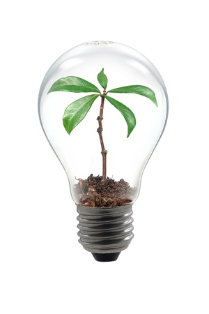 greenhouse and ecology: Plant Bulb