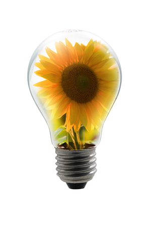 bulb lamp with sunflower Stock Photo