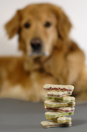 enticement: Dog watching a pile of dog-cookies