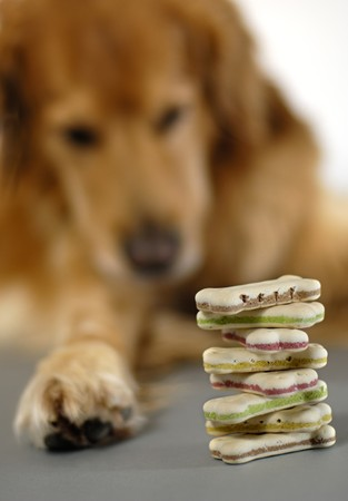 selfcontrol: Do, watching a pile of dog cookies