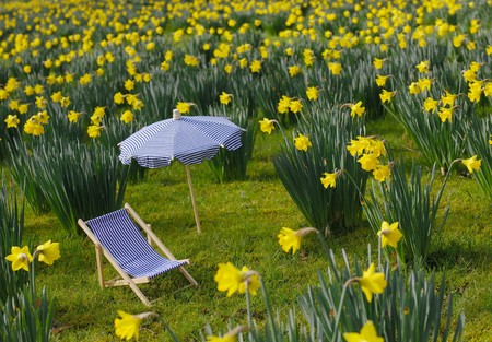 Miniature sunchair and parasol on a daffodil meadow Stock Photo - 7584437