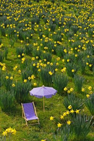 Miniatur sunchair and parasol in a daffodil meadow photo