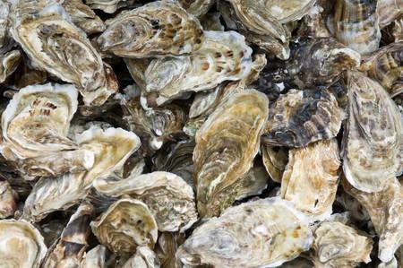 unopen: oyster