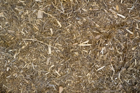 bark mulch Stock Photo - 13525481