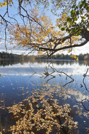 Branches with fall colors that hangs down at the lake Stock Photo - 10002111
