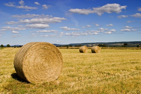ranching: Straw bale on the field Stock Photo
