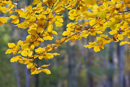 Autumn leaves on the branches in the forest Stock Photo - 10192178