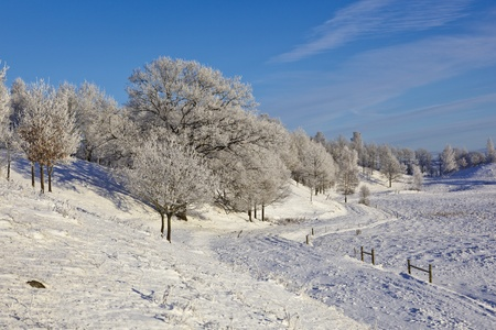 Deciduous tree forest with frost in winter landscape photo