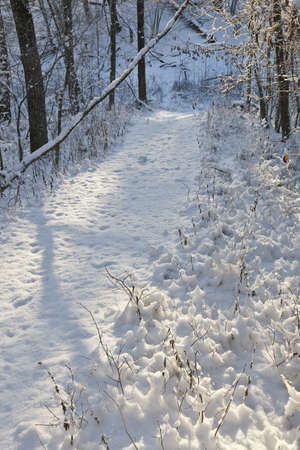 Footpath through the winter woods photo