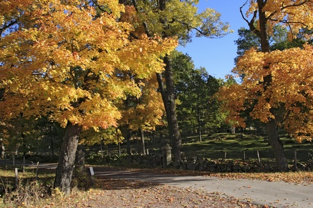 Autumn tree line at the road. Stock Photo - 10278044