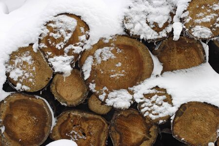 veiny: Timber