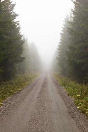 안개 낀 숲에서 비포장 도로 스톡 콘텐츠