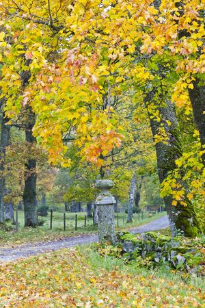Countryside road with gate posts in the autumn woods photo
