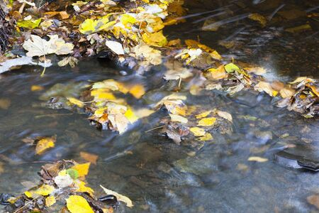 Brook with autumn leaves floating in the water, long exposure time Stock Photo - 10443281