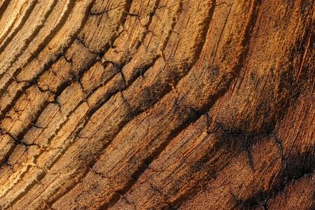 veiny: Veinied wood on a old board.