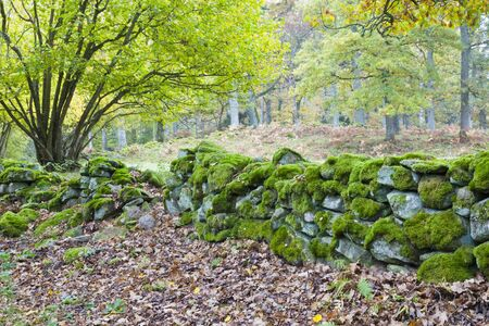 Old mossy stone wall in the autumn woods Stock Photo