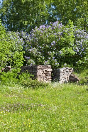 Summer meadow with blooming Common Lilac and a old ruin Stock Photo - 10610925