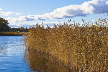waters  edge: Reeds in the waters edge of the Lake Stock Photo