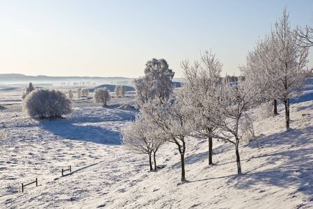 Deciduous tree on hillside with frost in winter landscape photo