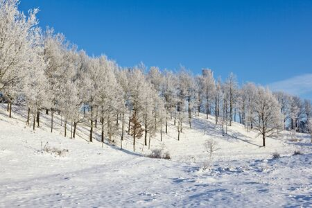 Forest with deciduous trees in winter landscape Stock Photo - 10752101
