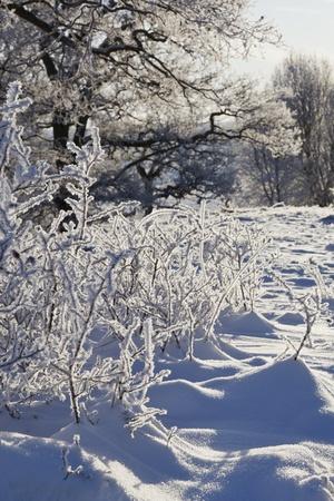 Winter landscape scene in backlit