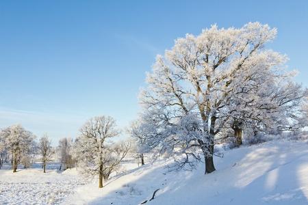 Oak tree in winter landscape Stock Photo