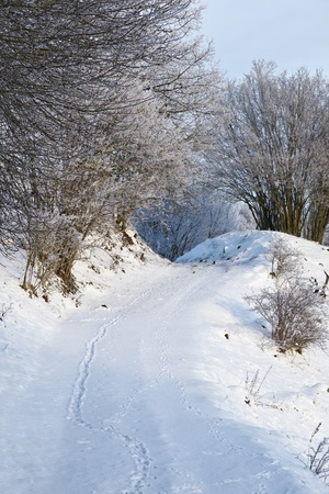 Rural road in winter landscape Stock Photo - 10751991