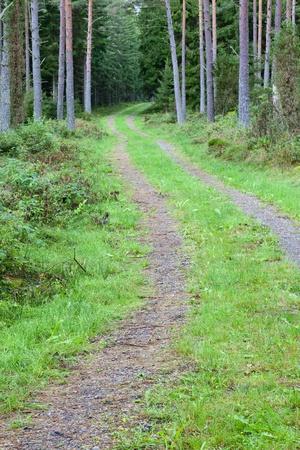 숲에서 비포장 도로
