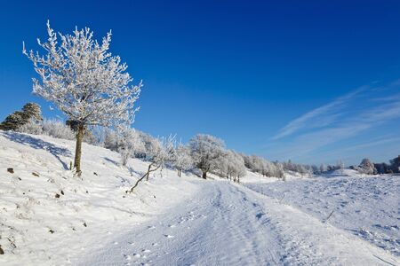 Snowy winter landscape with hoarfrost on the tree Stock Photo - 11240064