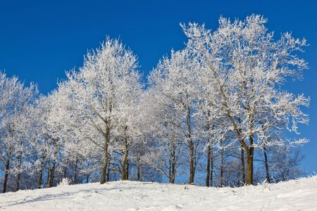Forest with deciduous trees in winter landscape Stock Photo - 11240220