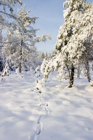 Deer tracks in the snow Archivio Fotografico