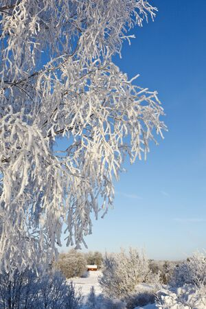 Tree branches with frost in winter landscape photo