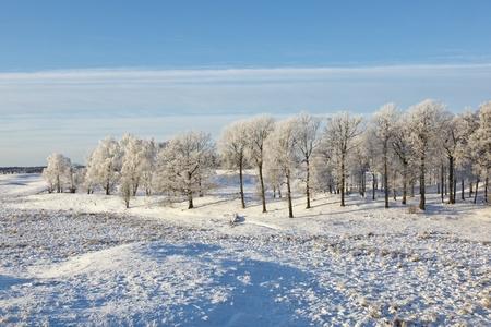 Winter Landscape with deciduous forest