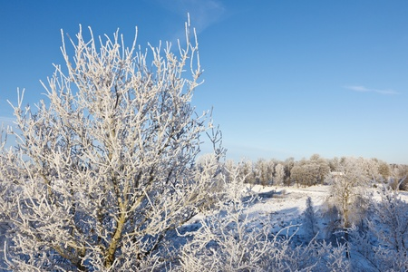 Trees with hoar frost in winter landscape photo