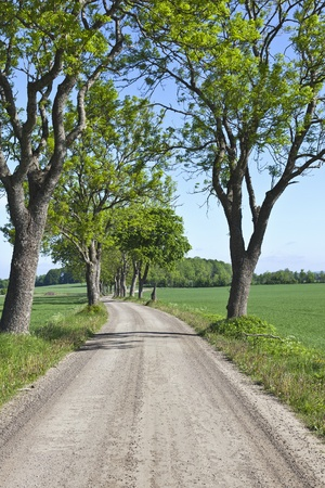 Gravel road lined with deciduous trees