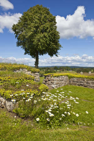 Flowering daisy with ancient ruins in the background photo