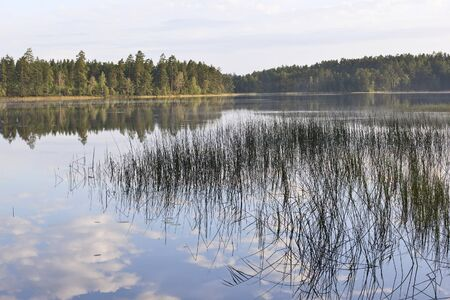 taiga: Forest Lake in the taiga