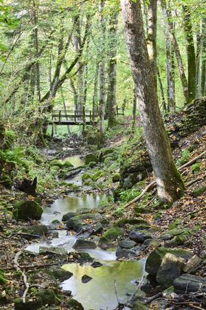 treetrunk: Brook in the woods with a bridge