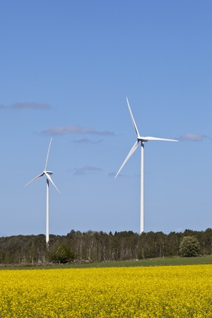 Wind power in the countryside and oilseed field photo
