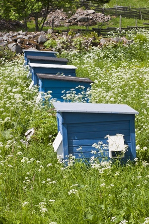 Bee hives in a garden