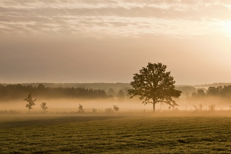Lonely tree on the ground with morning mist photo