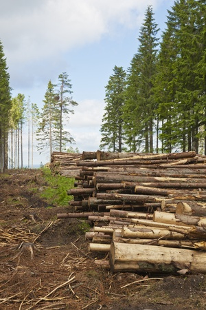Stacked timber on clearcutting area
