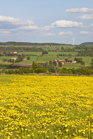 View of dandelion meadow and rural landscapes photo
