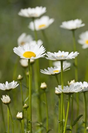 꽃 금잔화 데이지와 초원