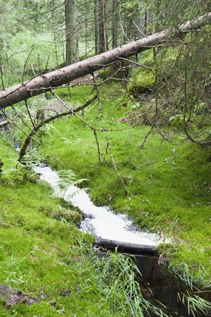 Wild primeval forest with fallen trees and a creek photo