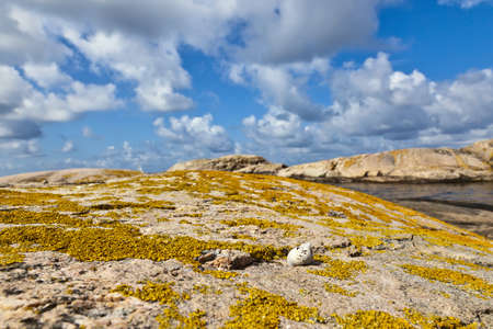 Snail on the lichen-covered rocks Stock Photo - 13507330